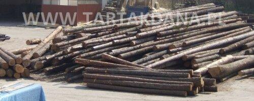 Drewno wielkowymiarowe